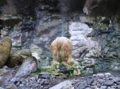 岩間(いわま)の噴泉塔群3.jpeg