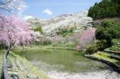 最明寺史跡公園.jpeg