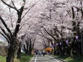 赤城南面千本桜.jpeg